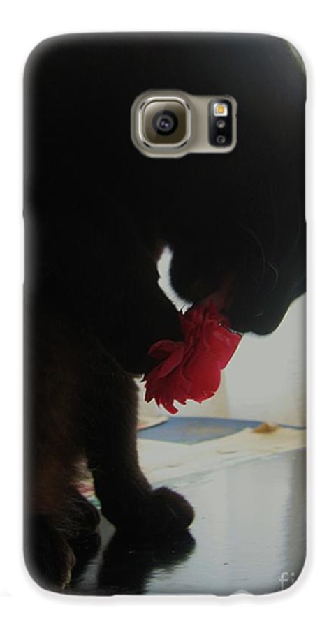 Photograph Cat Black Red Flower Camellia Galaxy S6 Case featuring the photograph Cat Eating Camellia by Seon-Jeong Kim
