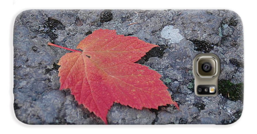 Leaf Galaxy S6 Case featuring the photograph Untitled by Kathy Schumann