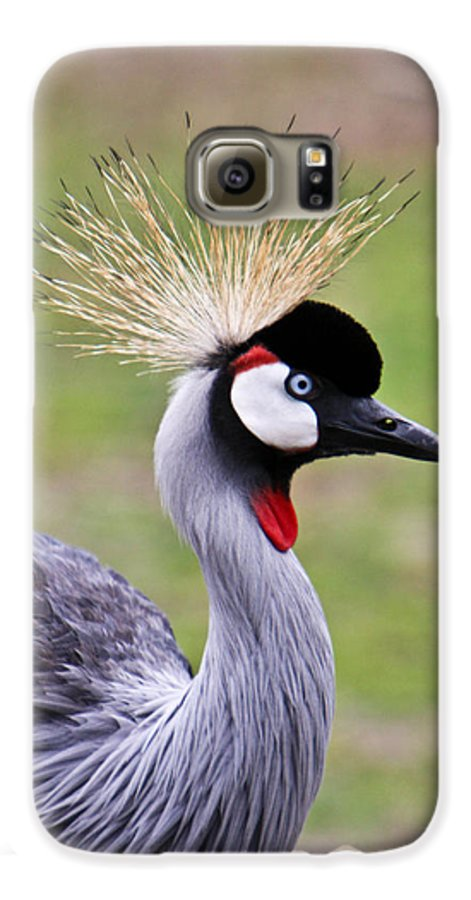 Bird Galaxy S6 Case featuring the photograph African Crowned Crane by Douglas Barnett