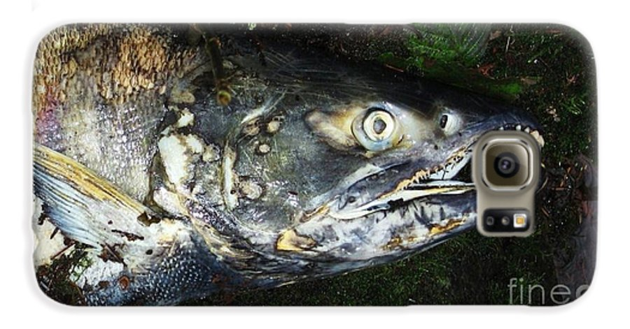 Photography Salmon Death Fish River Malahat Hatch Galaxy S6 Case featuring the photograph After Death by Seon-Jeong Kim