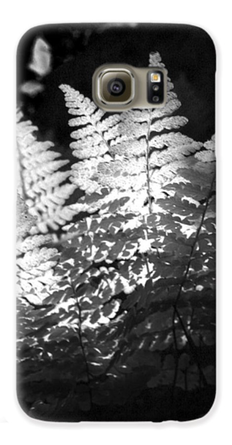 Fern Galaxy S6 Case featuring the photograph After Glow by Randy Oberg