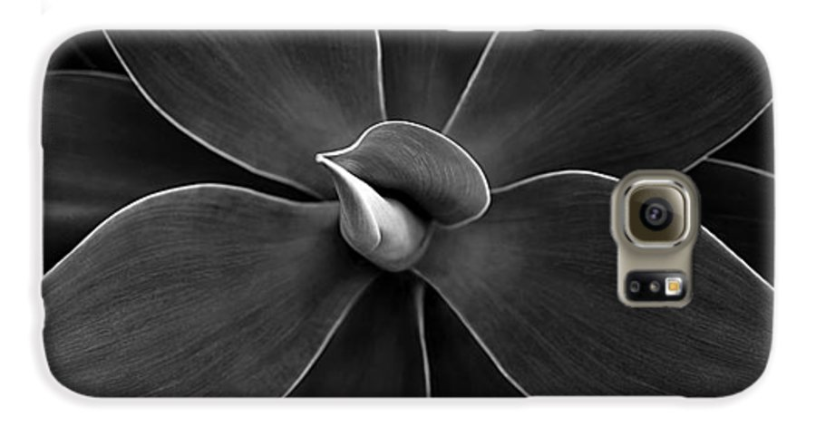 Agave Galaxy S6 Case featuring the photograph Agave Leaves Detail by Marilyn Hunt
