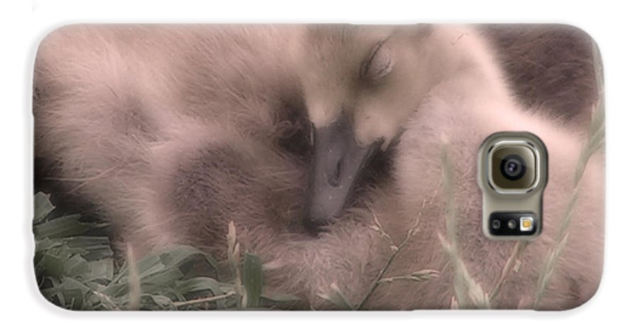 Goose Galaxy S6 Case featuring the photograph All Is Right In My World by Kenneth Krolikowski