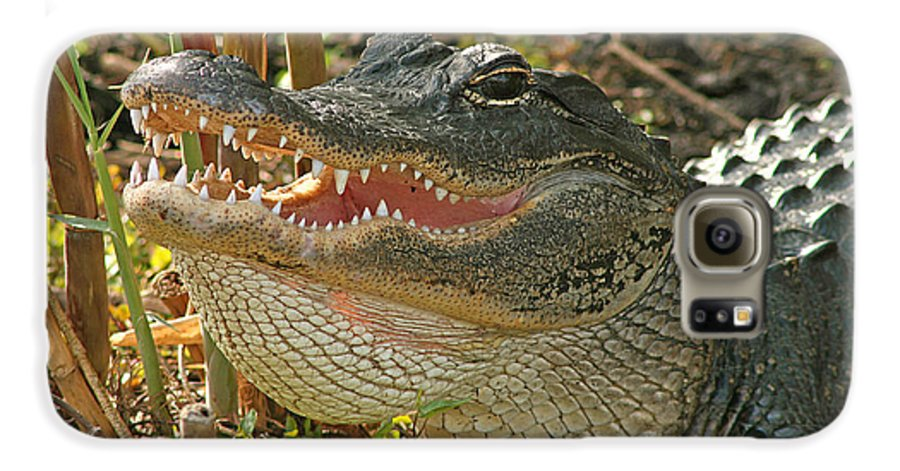 Alligator Galaxy S6 Case featuring the photograph Alligator Showing Its Teeth by Max Allen