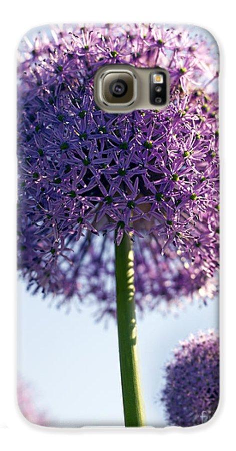 Allium Galaxy S6 Case featuring the photograph Allium Flower by Tony Cordoza
