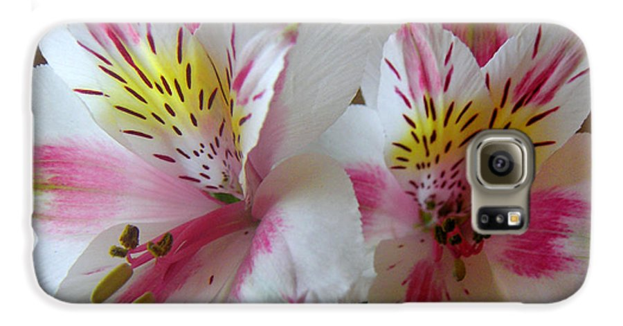 Nature Galaxy S6 Case featuring the photograph Alstroemerias - Heralding by Lucyna A M Green