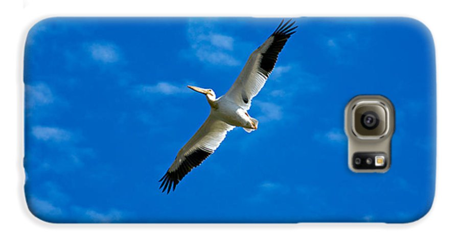 American Galaxy S6 Case featuring the photograph American White Pelican by Marilyn Hunt