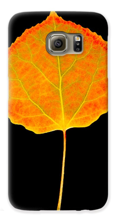 Leaf Galaxy S6 Case featuring the photograph Aspen Leaf by Marilyn Hunt