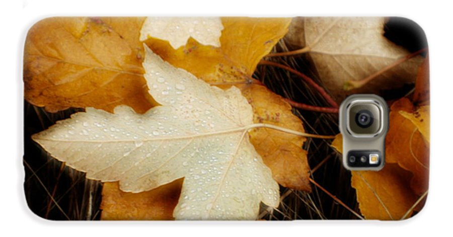 Leaf Galaxy S6 Case featuring the photograph Autumn Dew by Idaho Scenic Images Linda Lantzy