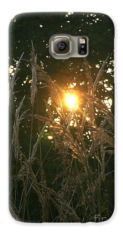 Light Galaxy S6 Case featuring the photograph Autumn Grasses In The Morning by Nadine Rippelmeyer