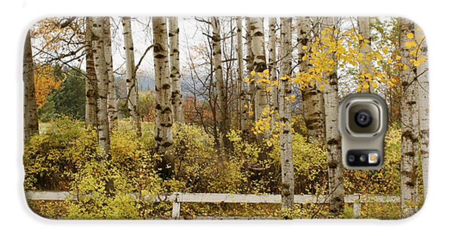 Grove Galaxy S6 Case featuring the photograph Autumn Grove by Idaho Scenic Images Linda Lantzy