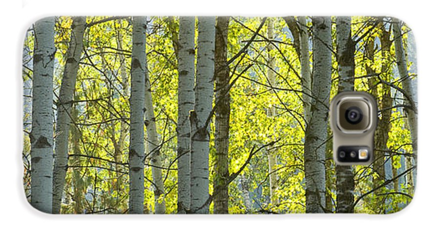 Trees Galaxy S6 Case featuring the photograph Autumn Through The Trees by Idaho Scenic Images Linda Lantzy