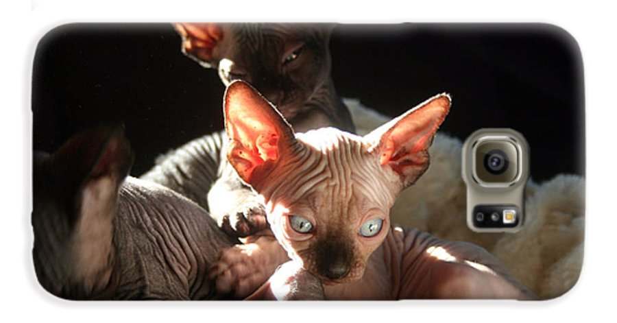 Photo Galaxy S6 Case featuring the photograph Baby Sphynx Cats by Ruben Flanagan