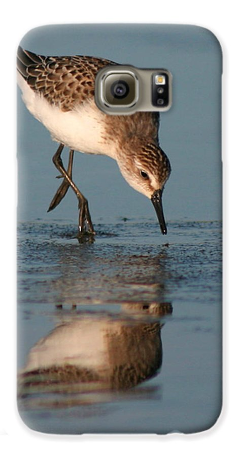 Sanderling Galaxy S6 Case featuring the photograph Ballet Feeding Of A Sanderling by Max Allen