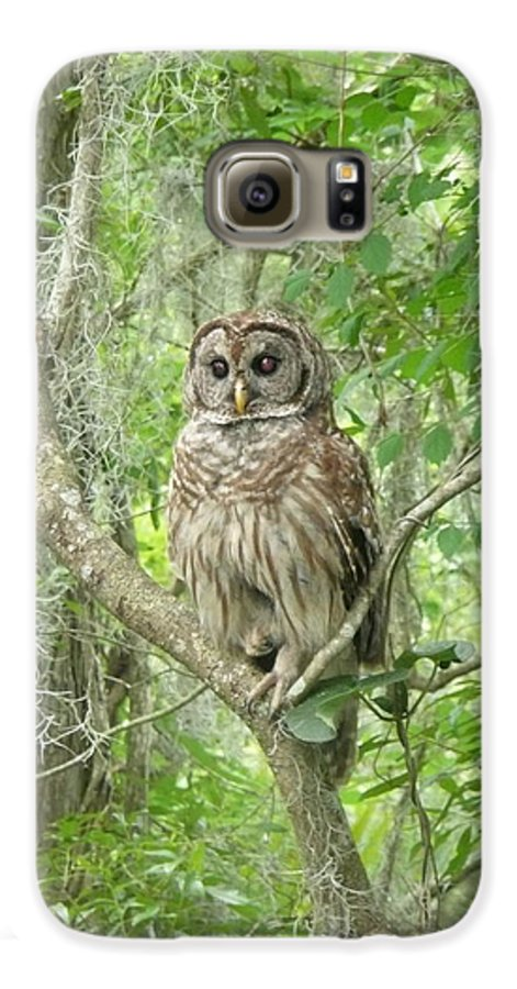 Nature Galaxy S6 Case featuring the photograph Barred Owl I by Kathy Schumann