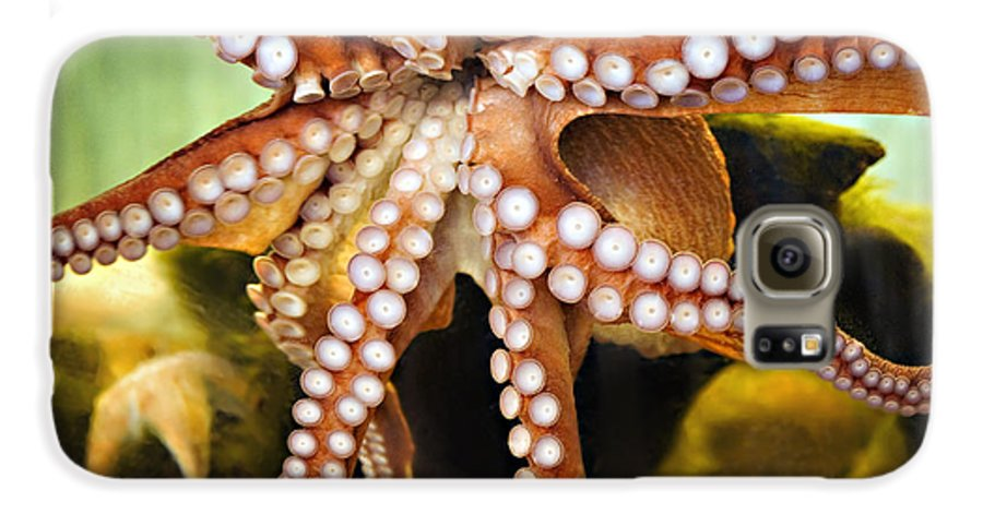 Octopus Galaxy S6 Case featuring the photograph Beautiful Octopus by Marilyn Hunt