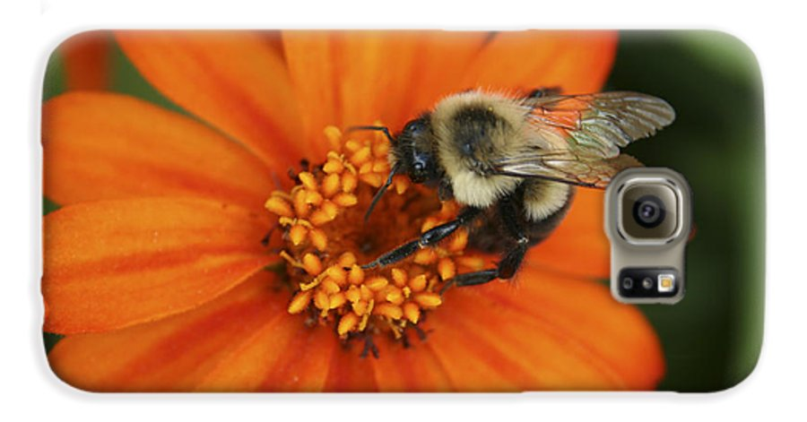 Bee Galaxy S6 Case featuring the photograph Bee On Aster by Margie Wildblood