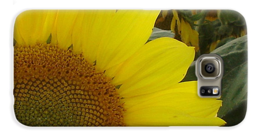 Bee's Galaxy S6 Case featuring the photograph Bee On Sunflower 1 by Chandelle Hazen