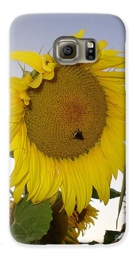 Bee On Sunflower Galaxy S6 Case featuring the photograph Bee On Sunflower 5 by Chandelle Hazen
