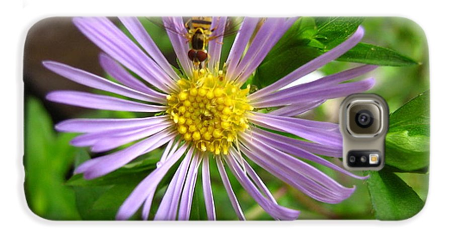 Bee Galaxy S6 Case featuring the photograph Bee On Wildflower by Melissa Parks