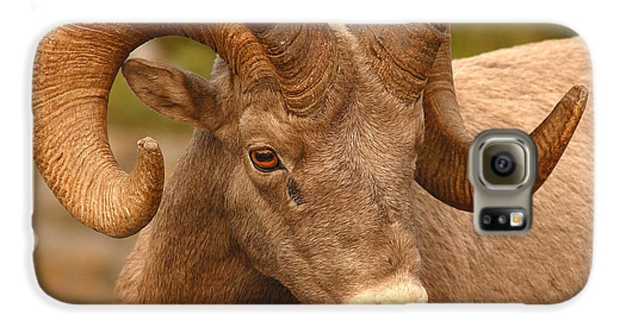 Bighorn Galaxy S6 Case featuring the photograph Bighorn Ram With Evident Disdain by Max Allen