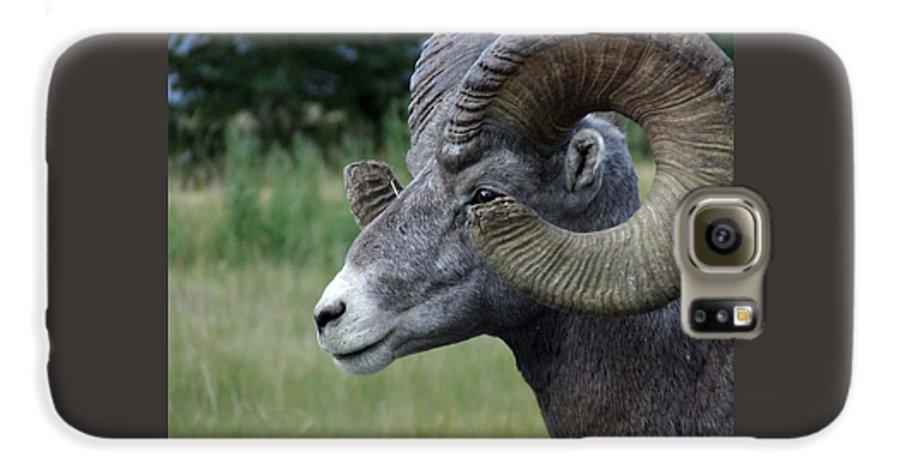 Big Horned Ram Galaxy S6 Case featuring the photograph Bighorned Ram by Tiffany Vest