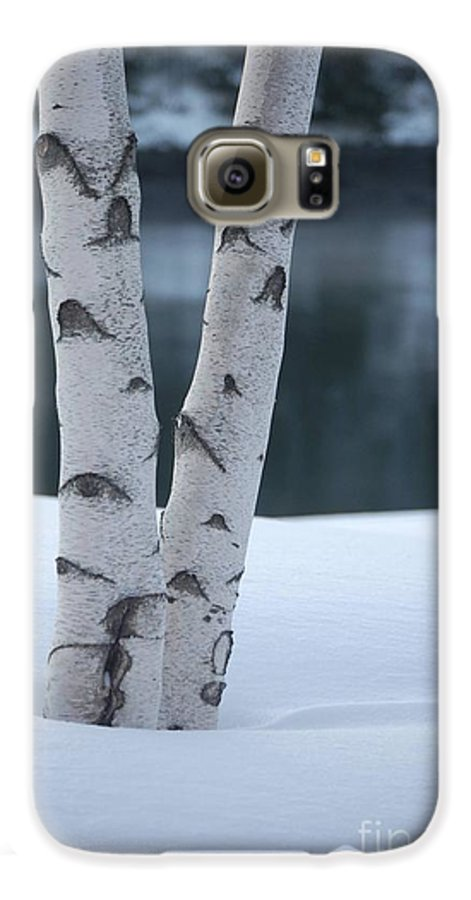 Birch Galaxy S6 Case featuring the photograph Birch Twins In Snow by Faith Harron Boudreau