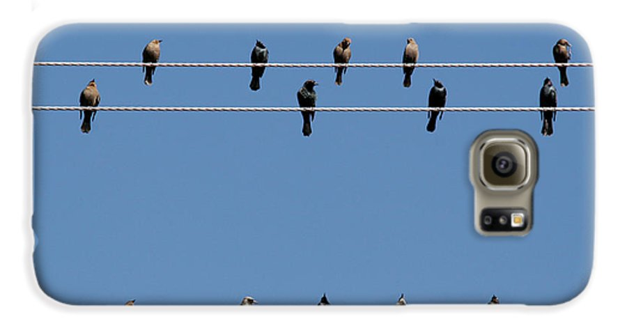 Birds Galaxy S6 Case featuring the photograph Bird On A Wire by Christine Till