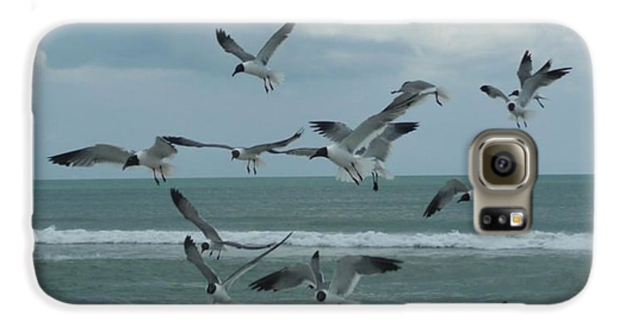 Birds Galaxy S6 Case featuring the photograph Birds In Flight by Barb Montanye Meseroll