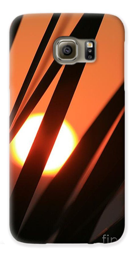 Sun Galaxy S6 Case featuring the photograph Blazing Sunset And Grasses by Nadine Rippelmeyer