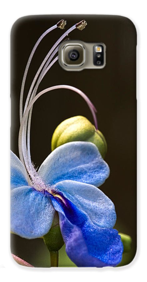 Flower Galaxy S6 Case featuring the photograph Blooming Butterfly by Christopher Holmes