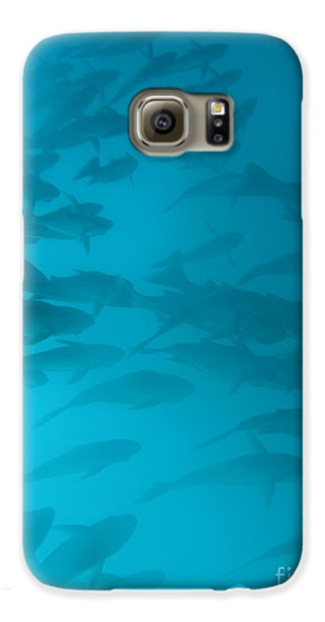 Underwater Galaxy S6 Case featuring the photograph Blue Flash by Chad Natti