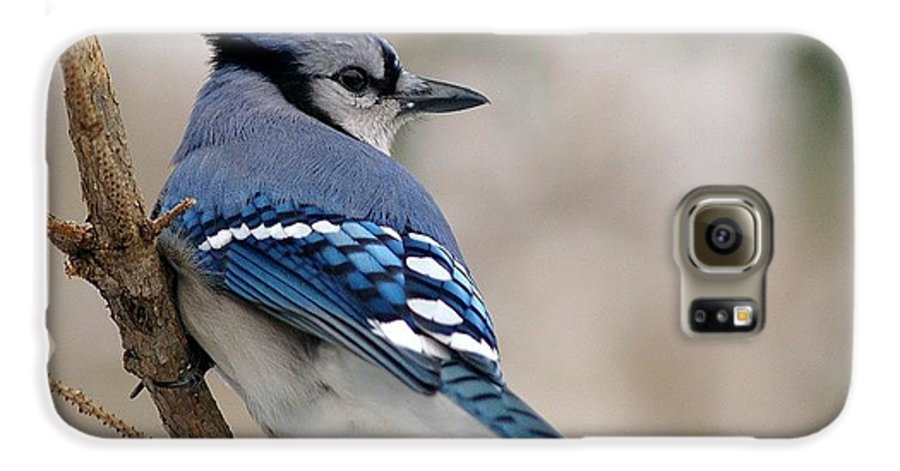 Blue Jay Galaxy S6 Case featuring the photograph Blue Jay by Gaby Swanson