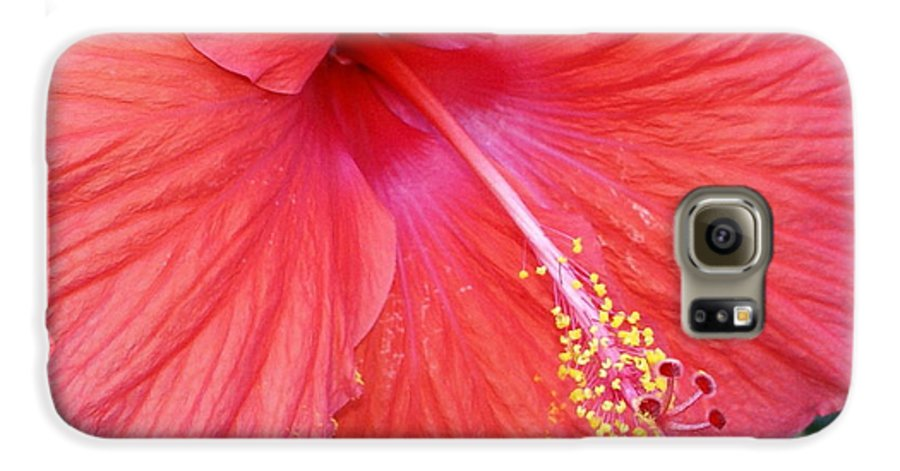 Flowers Galaxy S6 Case featuring the photograph Blushing Stamen by Debbie May