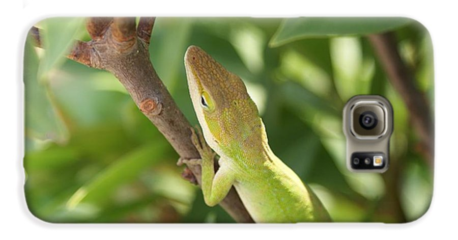 Lizard Galaxy S6 Case featuring the photograph Blusing Lizard by Shelley Jones