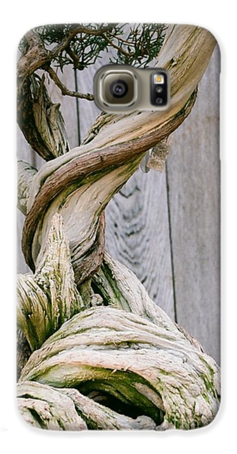 Tree Galaxy S6 Case featuring the photograph Bonsai by Dean Triolo