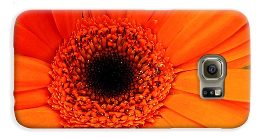 Flower Galaxy S6 Case featuring the photograph Bright Red by Rhonda Barrett