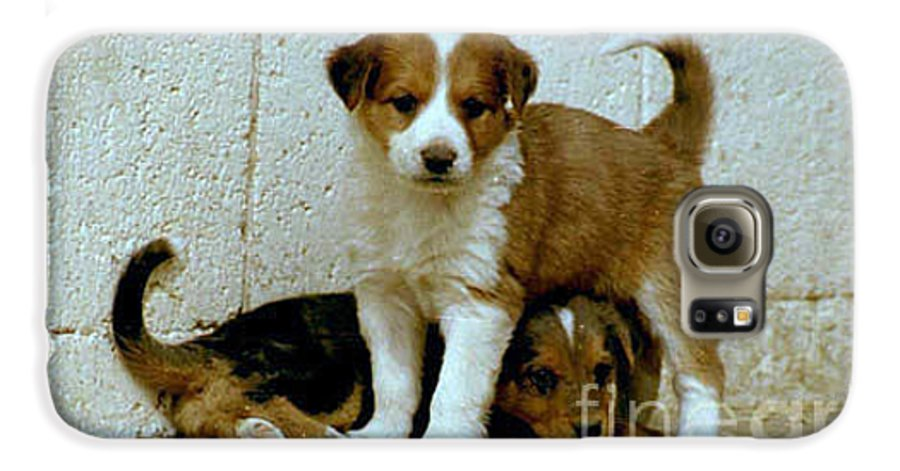 Puppies Galaxy S6 Case featuring the photograph Brothers by Kathy McClure
