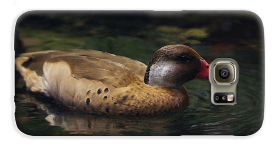 Duck Galaxy S6 Case featuring the photograph Brown Duck by Kenna Westerman