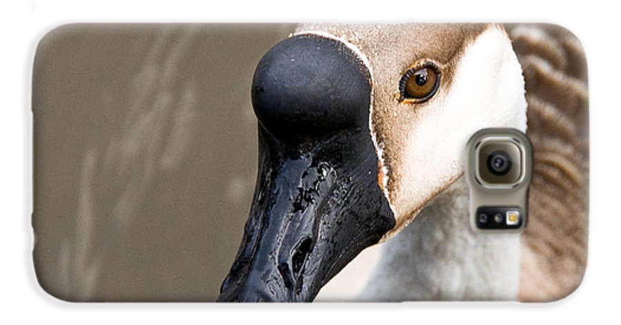 Chinese Brown Goose Galaxy S6 Case featuring the photograph Brown Eye by Christopher Holmes