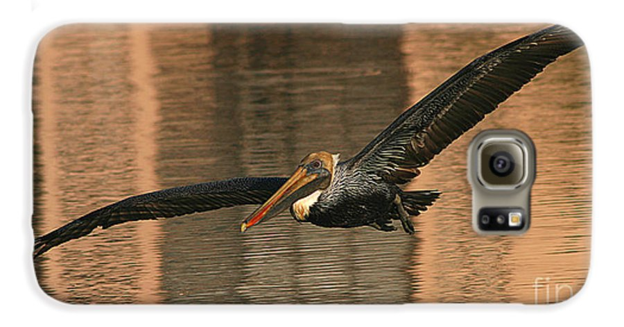 Pelican Galaxy S6 Case featuring the photograph Brown Pelican On A Sunset Flyby by Max Allen