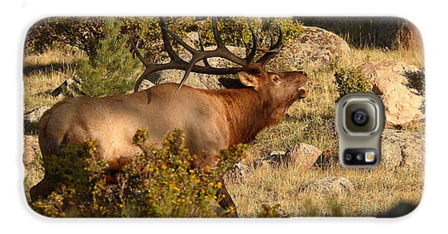 Elk Galaxy S6 Case featuring the photograph Bull Elk Bugling Among The Rocks by Max Allen