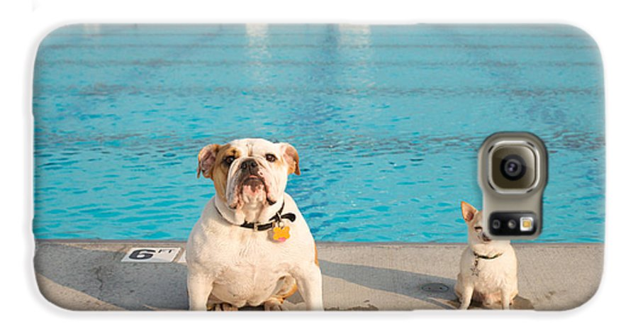 Animal Galaxy S6 Case featuring the photograph Bulldog And Chihuahua By The Pool by Gillham Studios