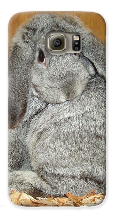 Bunny Galaxy S6 Case featuring the photograph Bunny by Gina De Gorna