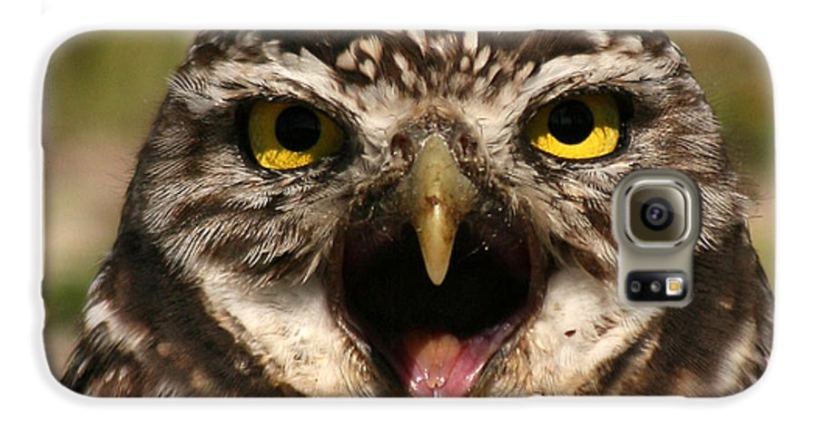 Owl Galaxy S6 Case featuring the photograph Burrowing Owl Eye To Eye by Max Allen