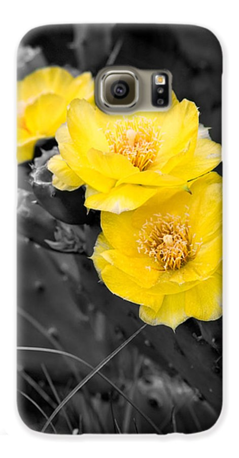 Cactus Galaxy S6 Case featuring the photograph Cactus Blossom by Christopher Holmes