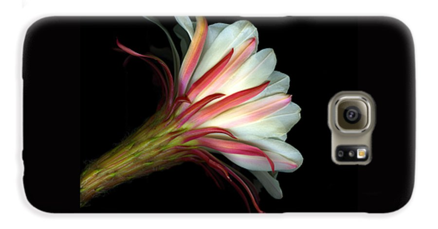 Scanart Galaxy S6 Case featuring the photograph Cactus Flower by Christian Slanec