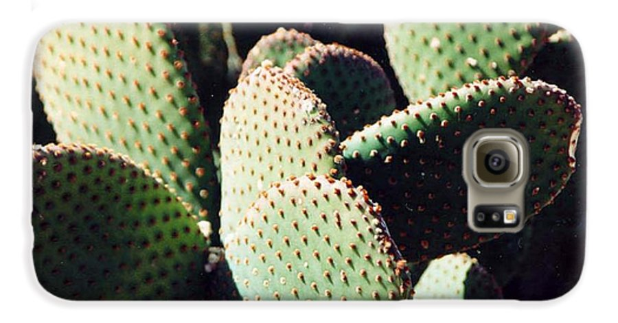 Field Galaxy S6 Case featuring the photograph Cactus by Margaret Fortunato