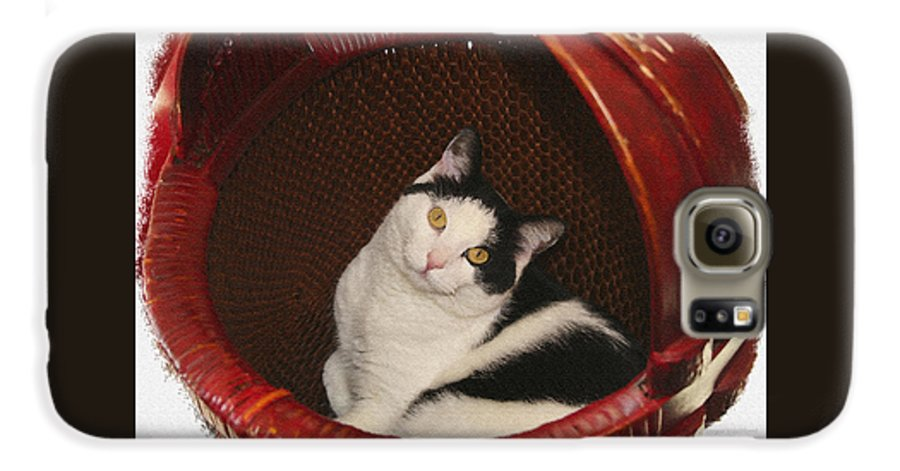 Cat Galaxy S6 Case featuring the photograph Cat In A Basket by Margie Wildblood
