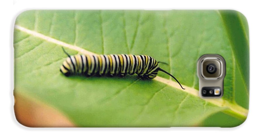 Caterpillar Galaxy S6 Case featuring the photograph Caterpillar by Kathy Schumann